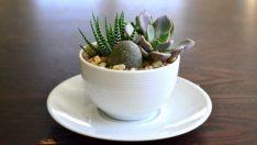 Kendiniz Yapabileceğiniz 17 Hoş Çay Fincanı Bahçe