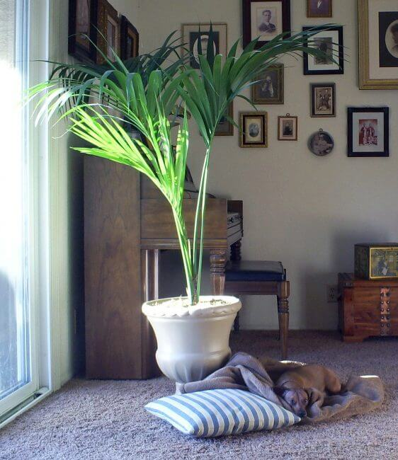35 Decoration Suggestions That Can Be Created With Beautiful Potted Plants