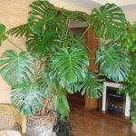 22. Yazlık Balkon Bitkileri